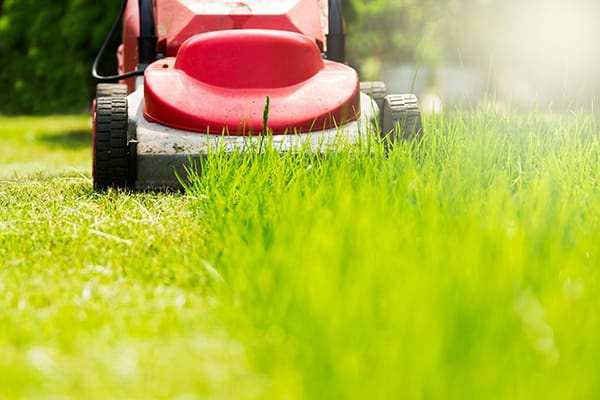 When it is best to mow your lawn – 3 important tips!