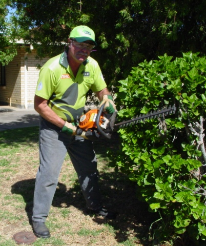 Hedge trimming v i p home services for Local lawn care services