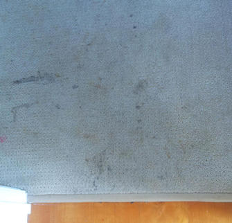 Carpet before cleaning in rental property at Auchenflower, Brisbane
