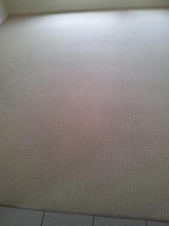 After photo of rental property in Taringa, Brisbane - After photo of rental property in Taringa, Brisbane after using the V.I.P. Home Services carpet cleaning service