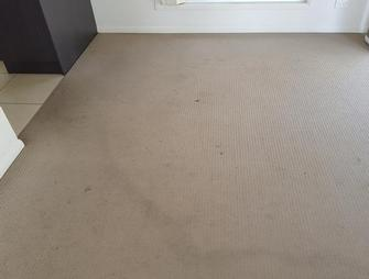 Annerley, Brisbane - This carpet in Annerley had apparently been cleaned the day prior to me being asked to reclean. The company that undertook the job would not go back and clean properly. Check out the next picture to see the difference.