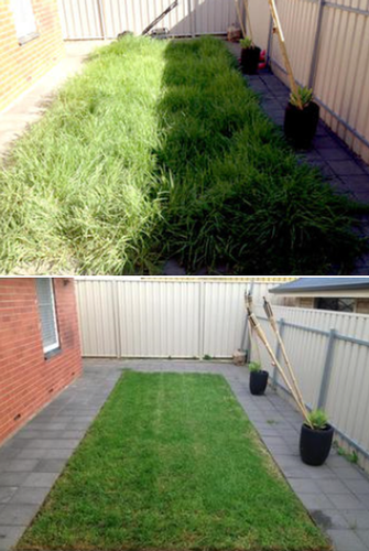Overgrown Lawn - before and after - The after photo was taken 6 weeks later and included lawn care such as fertilising and regular mowing.
