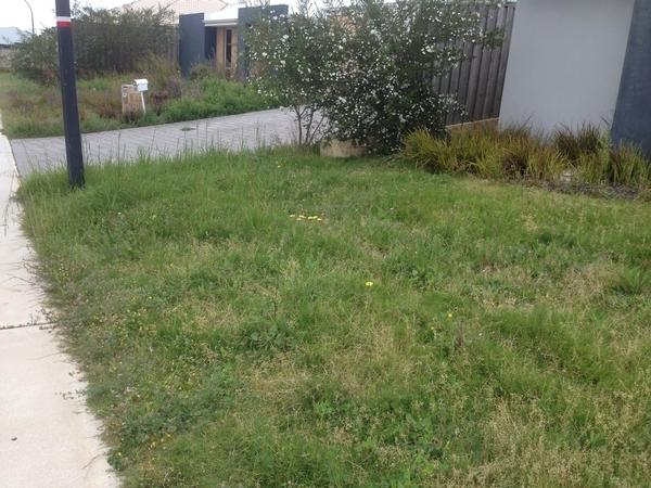 Before & after mowing. Ellenbrook