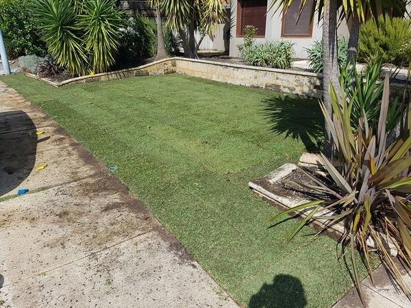 New lawn laid in Floreat