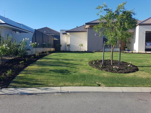Roses planted and black mulch has been laid to give a clean and elegant look in Banksia grove