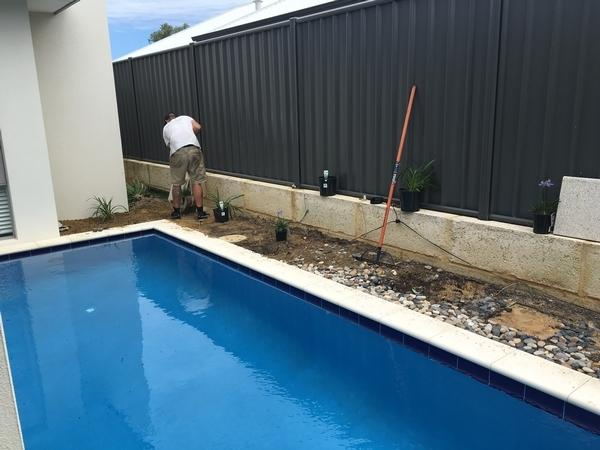Around the pool area had its old plants removed and replaced with blue and white Agapanthus in Banksia Grove