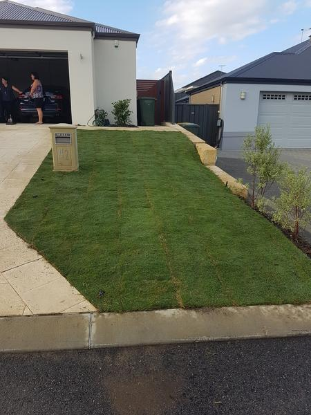 The Winsdor green Couch lawn has been laid an compacted to give the front garden the finishing touches in Banksia Grove