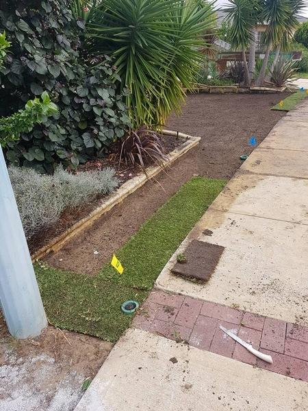 Laying new Palmetto Soft Leaf Buffalo lawn in Floreat