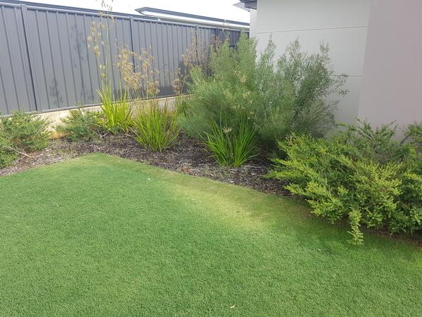 Pre Garden maintenance and clean up in Banksia Grove