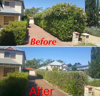 Hedging before and after - This hedge needed a serious prune to reduce the size of it before it got too out of control. Over a few weeks it will green up again nicely. A very happy customer.