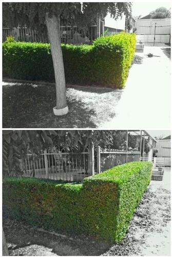Hedging - Hedging done in High Wycombe