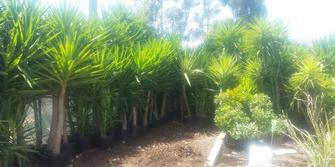 Plants in stock for landscaping