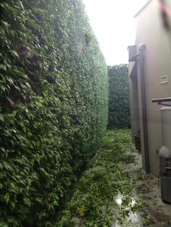 Hedge trimmimg in Toorak 2 - The key to a good looking hedge is getting it straight.