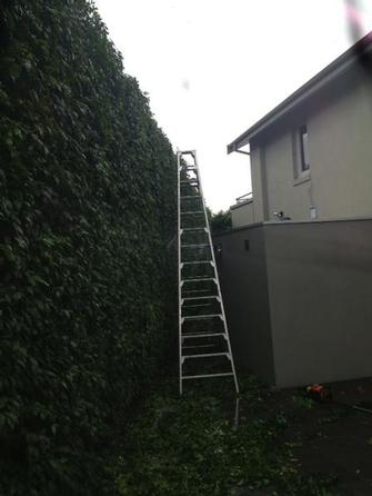 Hedge trimmimg in Toorak - A BIG hedge needs a BIG ladder!