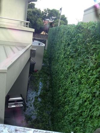 Hedge trimmimg in Toorak 1 - Starting to come together now.