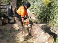 From small tree prunning to removal of large trees. We do it all.