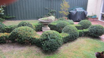 English box hedge shaping in Toorak - Fancy English box hedge. Try thinking outside the box on your place next time.