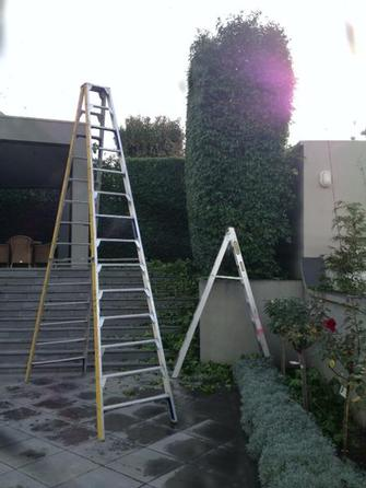 Hedge trimmimg in Toorak 5 - This pic gives you an idea of how big this hedge was an at thesame time the ladder to tackle it is. Give V.I.P. a call if you too have a hedge like this that needs the VIP Treatment.