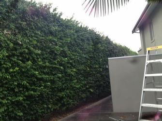Hedge trimmimg in Toorak before shot 1 - This Toorak hedge is looking a bit scrappy. It needs the VIP treatment!