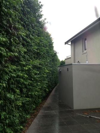 Hedge trimmimg in Toorak - Now this big hedge in Toorak just needed a tidy up to bring it back to looking great.