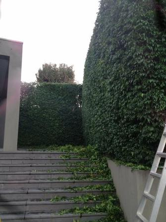 Hedge trimmimg in Toorak 3 - It makes my job worthwile when I can look at a beautiful hedge like this done.