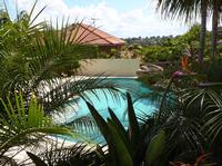 Pool - A tropical oasis made possible by the right plants.