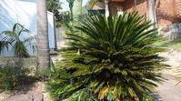 Garden With A Difference - Tall palms and large plants help give that special effect.